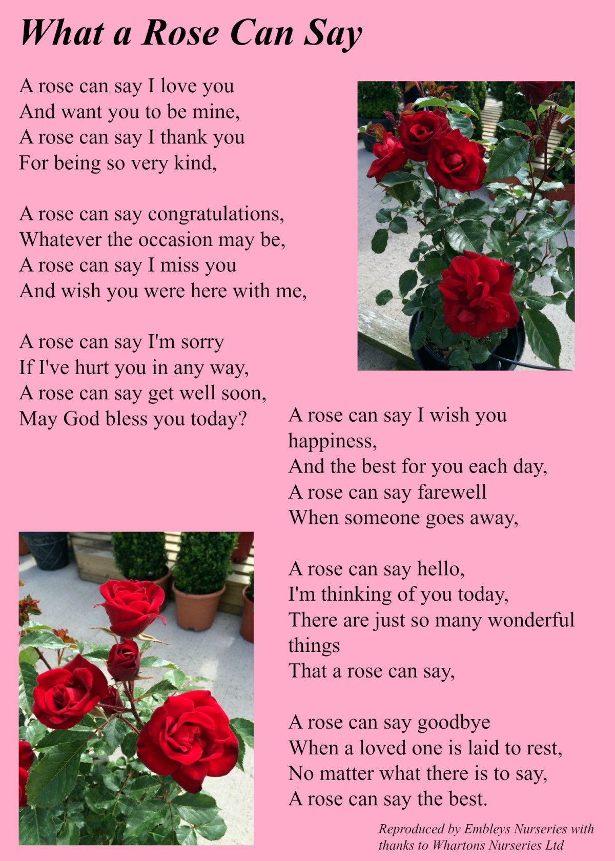 Poems about roses and love