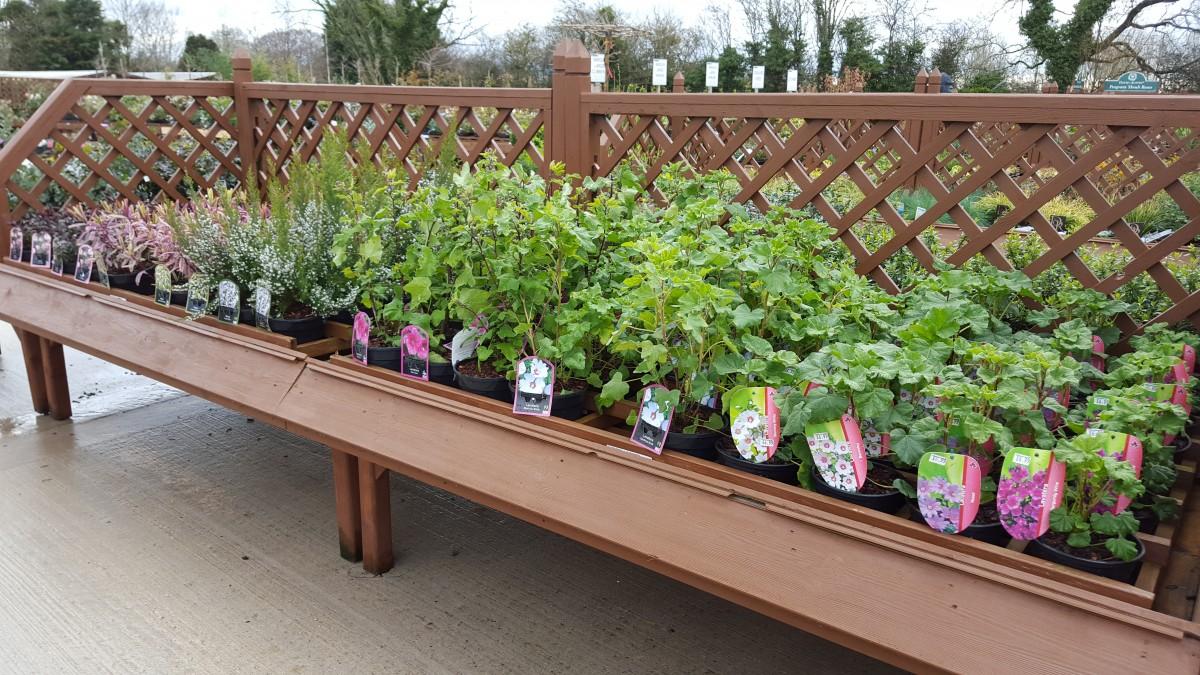 Shrubs at embleys nurseries garden centre near preston and southport