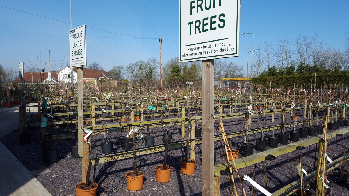 Fruit Trees at embleys nurseries garden centre near preston and southport