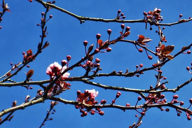 April-Gardens-Embleys-Nurseries