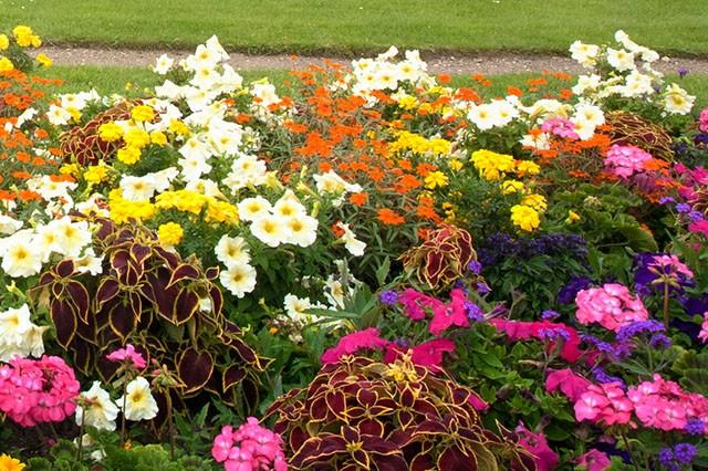 August-Gardens-Embleys-Nurseries