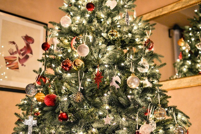 December-Gardens-Embleys-Nurseries