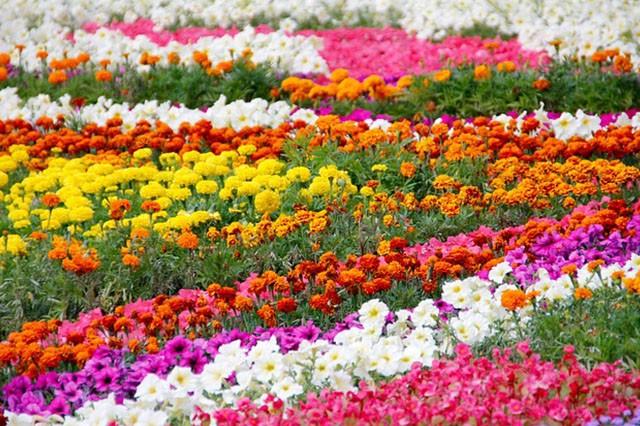 June-Gardens-Embleys-Nurseries