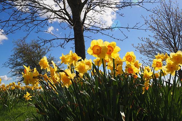 March-Gardens-Embleys-Nurseries