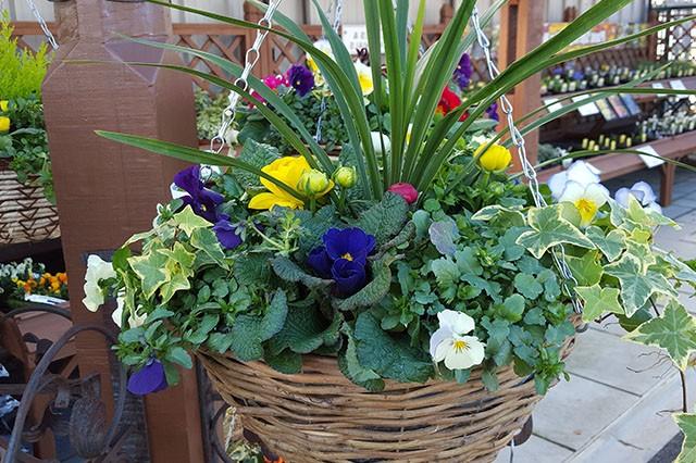 May-Gardens-Embleys-Nurseries