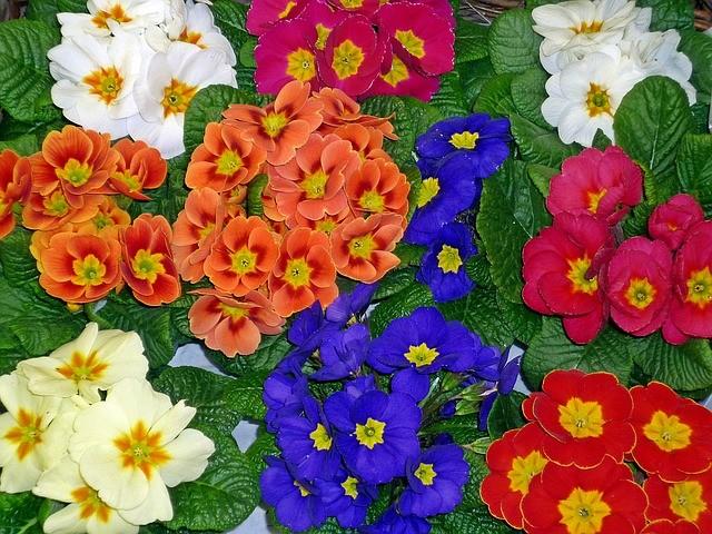 primroses-preston-southport-lancashire